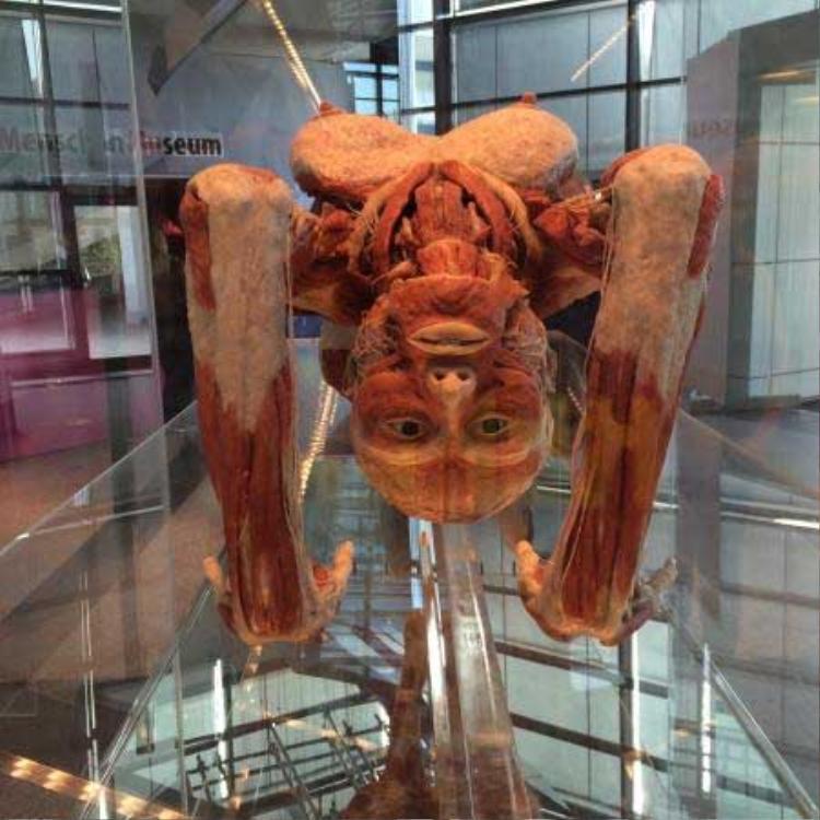 Bên trong bảo tàng cơ thể người đầu tiên trên thế giới