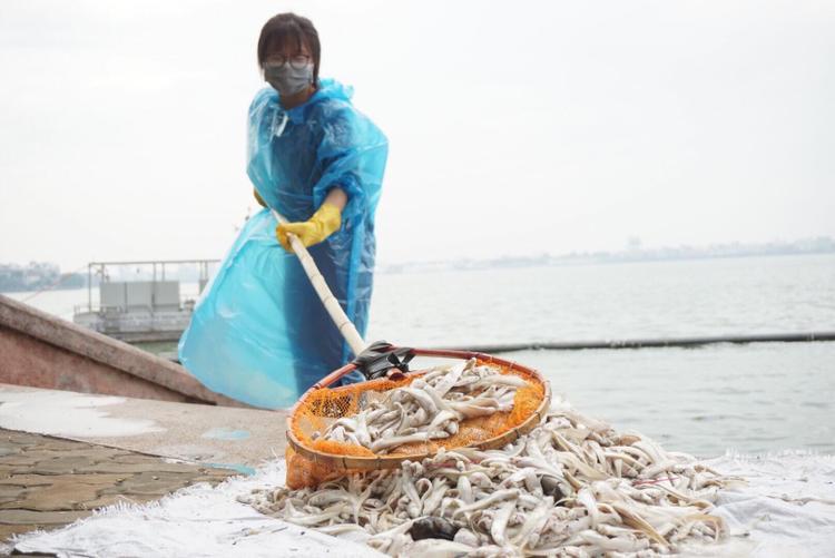 Nhiều nữ thanh niên tình nguyện của quận Tây Hồ vớt mỏi tay nhưng số lượng cá không thấy vơi mà mỗi lúc nổi lên càng nhiều.