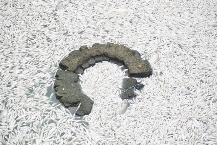 Theo người dân, lâu lắm rồi họ lại mới thấy cá chết nhiều ở hồ Tây đến như vậy. Số lượng cá chết ước lượng lên đến hàng tấn, hiện chưa có thống kê cụ thể.