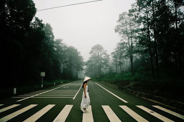 Một con đường thông đẹp như lạc vào cổ tích tại Măng Đen. (Ảnh: Toan Minh Le)