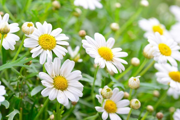So sánh nữ minh tinh với hoa, Triệu Lệ Dĩnh, Dương Mịch, Phạm Băng Băng là những loài hoa gì?