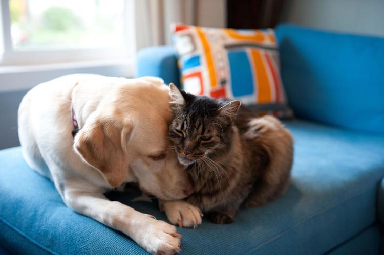Có một lý do để người ta gọi chó là người bạn tốt nhất của con người. Một nghiên cứu cho thấy những người có vật nuôi trong nhà sẽ cải thiện được cuộc sống của họ.