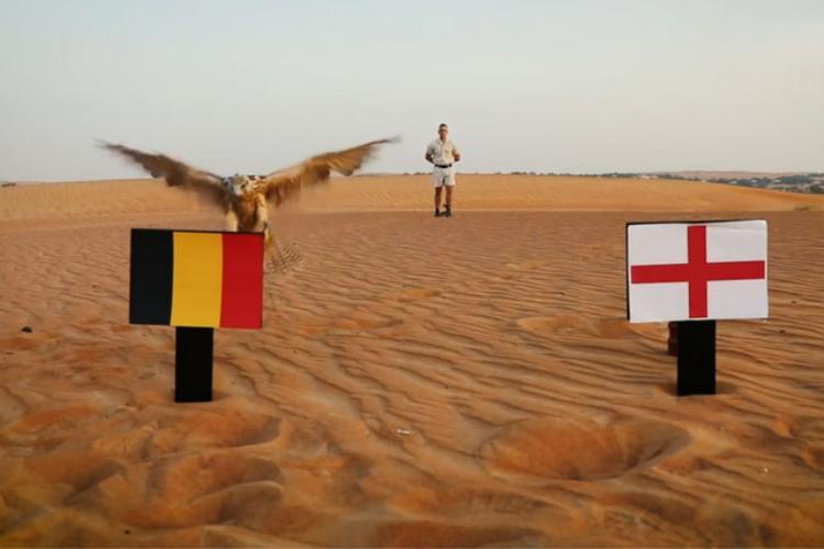 Tiên tri chim cắt dự đoán Bỉ đánh bại Anh.