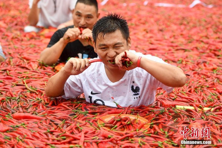 Trong lúc thi, mỗi người chơi được phát cho một đĩa ớt với số lượng trên ớt là bằng nhau để thuận tiện trong việc đếm.