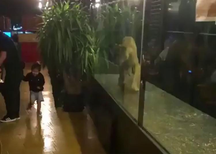 Hình ảnh chú sư tử đi theo cô bé cắt ra từ video.
