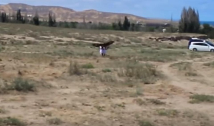 Bé gái 8 tuổi bị đại bàng quắp trong buổi biểu diễn chim săn mồi.