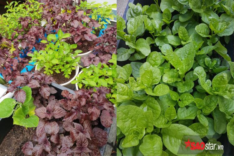 Hạt giống rau, củ được mẹ chị Lạng gửi từ Việt Nam còn hạt giống và củ hoa được chồng chị mua từ siêu thị về tặng vợ.