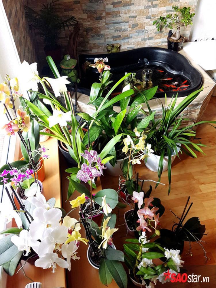 Những thùng trồng rau, hoa là thùng cao su dùng để trộn bê tông được chồng chị mua về, đục lỗ và cho đất để chồng cây.