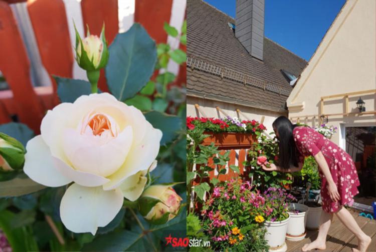 Chị Lạng chia sẻ, khu vườn của chị rộng 40m2 ở một thị trấn nhỏ thuộc tiểu bang Bayern, Đức. Chị theo chồng sang đây được 8 năm, gia đình nào ở đây cũng đều yêu hoa nên ít nhất cũng có vài chậu.