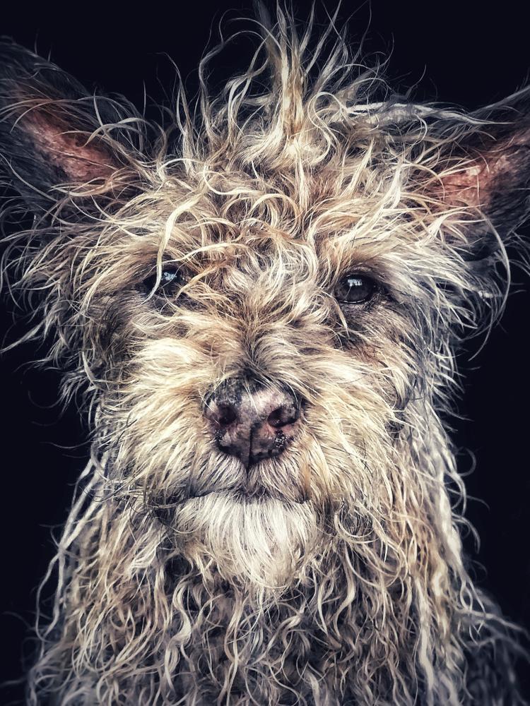 """Giải nhất Động vật - """"'Django' Old man baby dog"""": Django là một chú chó được sinh ra và lớn lên trong một tu viện phật giáo ở Hồ Nam, Trung Quốc. Chú ta thích đi dạo trên bờ biển và nghe Miles Davis. Chụp bằng iPhone 7 Plus. (Robin Robertis)."""