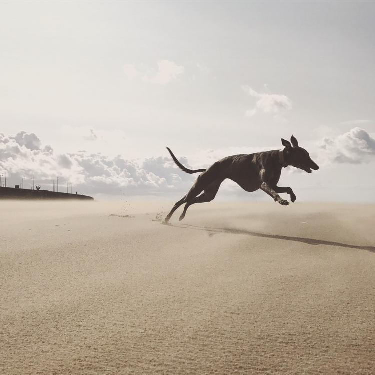 """Giải nhì Động vật - """"O to not-quite-Seagull-speed in 60 seconds"""": Chơi đùa trên bờ biển gần như không có người vào một ngày đầu gió, chú chó của chúng tôi chạy vòng quanh và đuổi theo những chú hải âu từ xa. Chụp bằng iPhone 7. (Katie Wall)"""