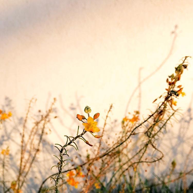"""Giải nhất Hoa - """"Lights"""": Tôi đang đỗ xe chuẩn bị vào mua đồ thì nhìn thấy ánh sáng tuyệt vời trên cành hoa và bức tường. Chụp bằng iPhone 7. (Alison Helena)"""