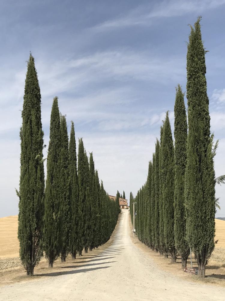 """Giải nhất Cây cối - """"Road of Tuscany"""": Chụp bằng iPhone 7 Plus. (Lidia Muntean)"""