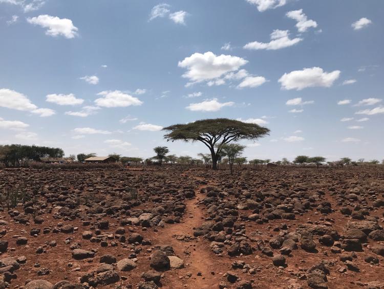 """Giải nhì Cây cối - """"Church Tree"""": Chụp bằng iPhone 7. (Brian Grasso)"""