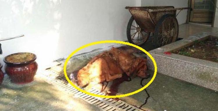 Chú chó cắn chủ tới thập tử nhất sinh ở Trung Quốc.
