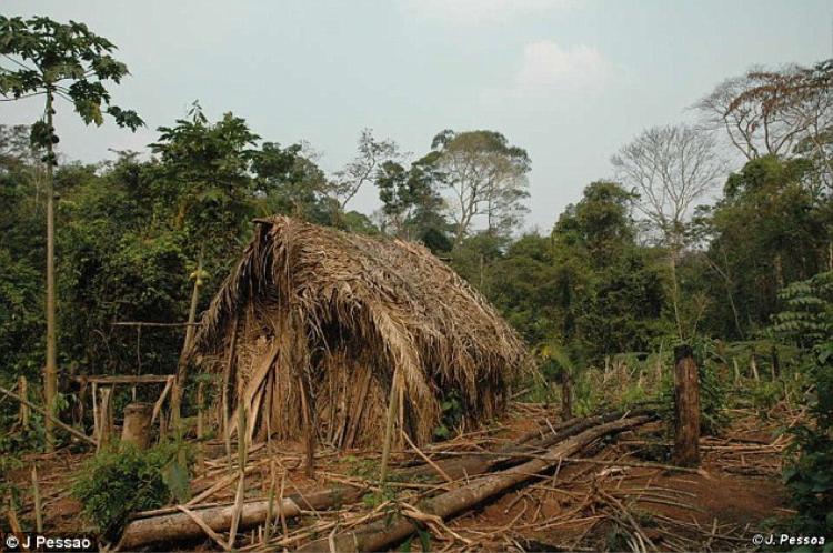 Ngôi nhà của anh được dựng bằng lá rừng và gỗ. Ảnh: J.Pessao