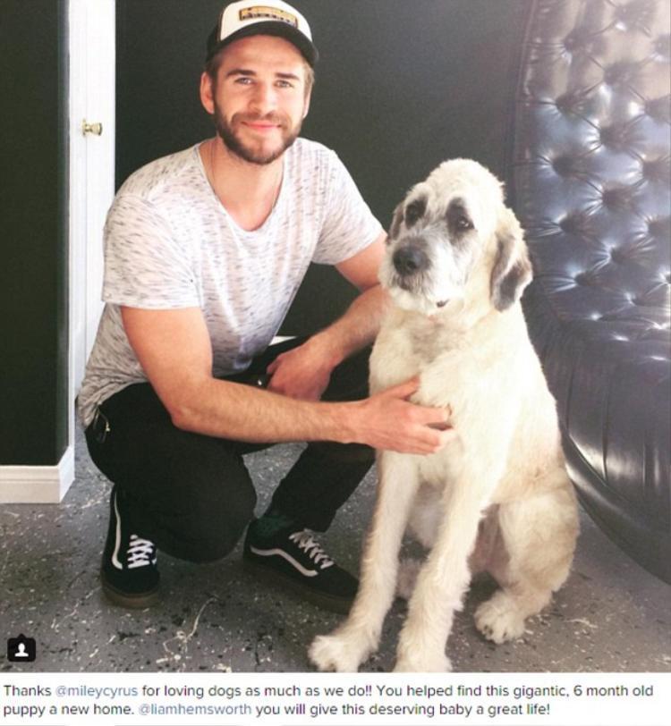 Tháng 11/2015: Miley giúp Liam nhận nuôi chú chó Dora. Nam diễn viên đã công khai cám ơn cô nàng trên mạng xã hội.