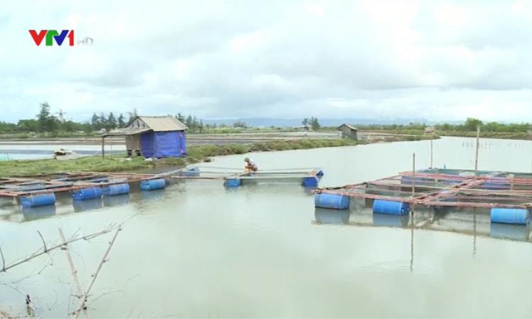 Nhiều lồng bè nuôi cá của người dân Hà Tĩnh bị thiệt hại do nước mặn xâm nhập. (Ảnh: Nguồn VTV).