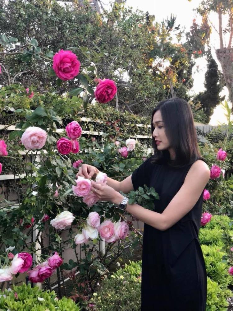 Cô thường xuyên khoe ảnh trên facebook. Trong hình là những cây hoa hồng rực rỡ được chính bàn tay người đẹp chăm sóc.
