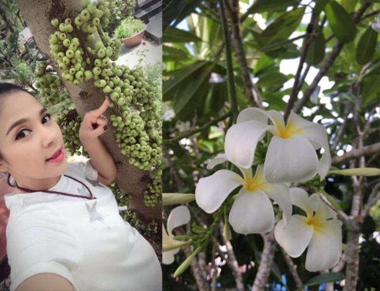 Nhiều người khen ngợi Việt Trinh và mong ước có cuộc sống giản đơn, yên bình bên thiên nhiên của cô.