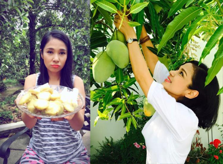 Căn nhà của Việt Trinh gây ấn tượng với khu vườn ngập cây trái như những nhà vườn quen thuộc ở Nam Bộ.
