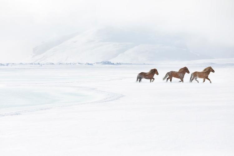 Những bức ảnh này được nhiếp ảnh gia Doggett chụp lại trong lần đầu tiên đến với đất nước băng đảo.