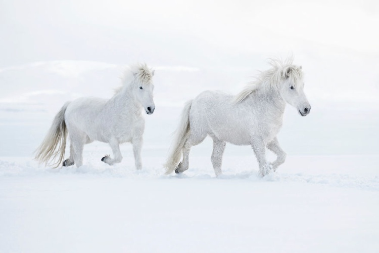 Mục đích của ông khi thực hiện bộ ảnh này đó là làm nổi bật mối quan hệ độc đáo giữa Iceland và loài ngựa.