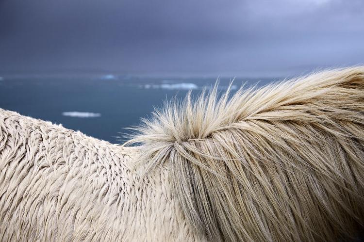 Không chỉ cho người xem thấy được nét đẹp của thiên nhiên và loài ngựa, bộ ảnh cũng mang tính nghệ thuật cao.