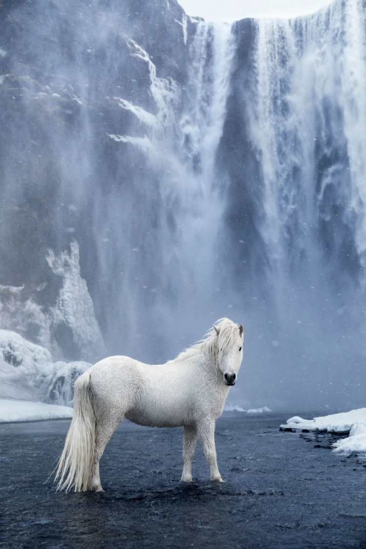 Với ông, Iceland không chỉ đẹp và huyền bí, mà còn là sự kết hợp hòa quyện giữa thiên nhiên và động vật hoang dã.