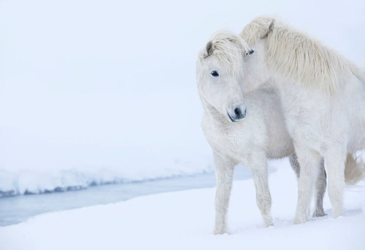 Khung cảnh lãng mạn giữa màn tuyết trắng.