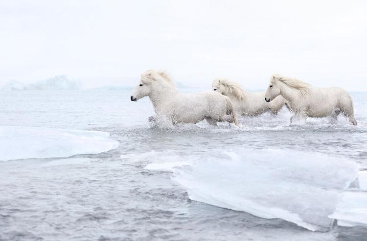 Những con ngựa là sự kết hợp hoàn hảo với vùng đất ngoạn mục này.