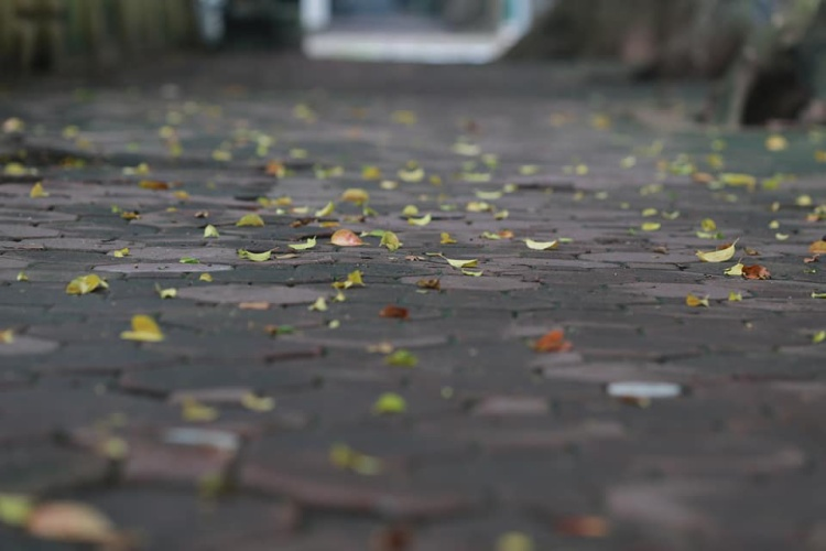 Bạn nhận ra không? Hà Nội đã bắt đầu chớm thu, lá bắt đầu nhuộm vàng khu phố rồi đấy