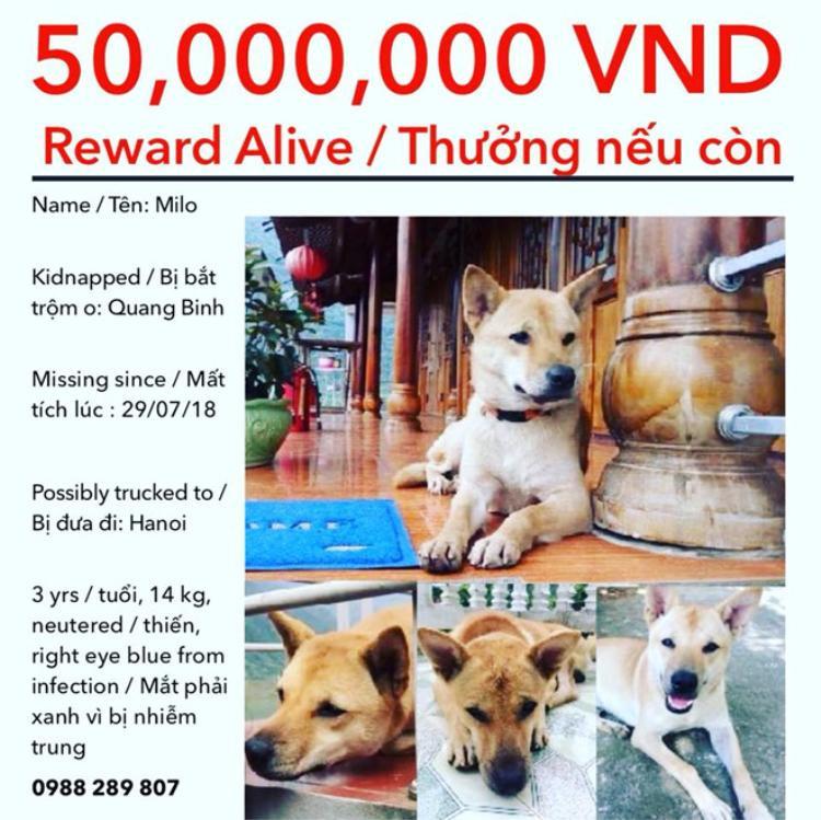 Jamie McNulty hứa thưởng 50 triệu đồng cho tổ chức hoặc cá nhân nào tìm được chú chó Milo còn sống. Ảnh: FB Jamie McNulty.