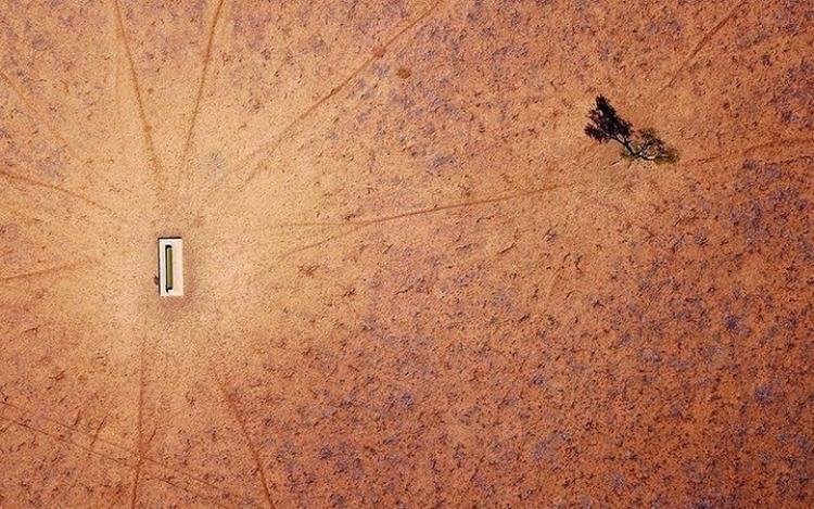 Cây xanh duy nhất còn lại bên ngoài một trang trại ở New South Wales. Trong gần một thập kỷ qua, khu vực này có rất ít mưa.