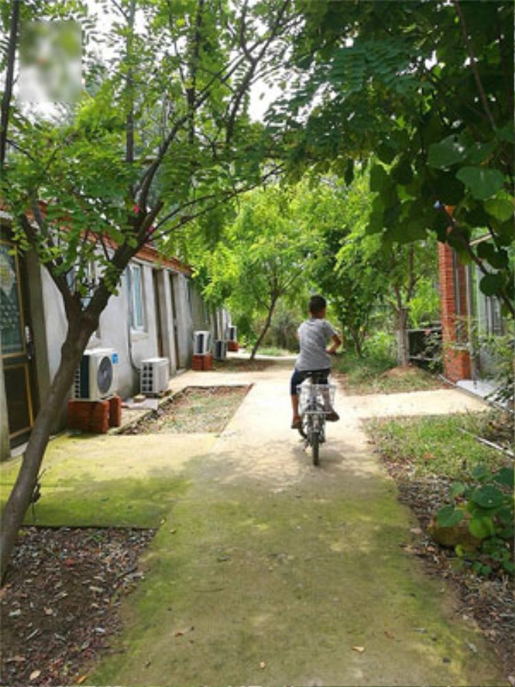 Cuộc sống trên đảo ngập tràn màu xanh của cây lá. Ảnh: Kwong Wah