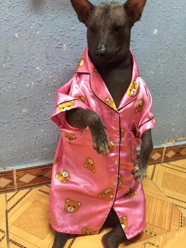 """Em có quyền điệu nhé! Cười không nhặt được mồm với hình ảnh chú chó """"điệu"""" trong bộ pijama màu hồng"""