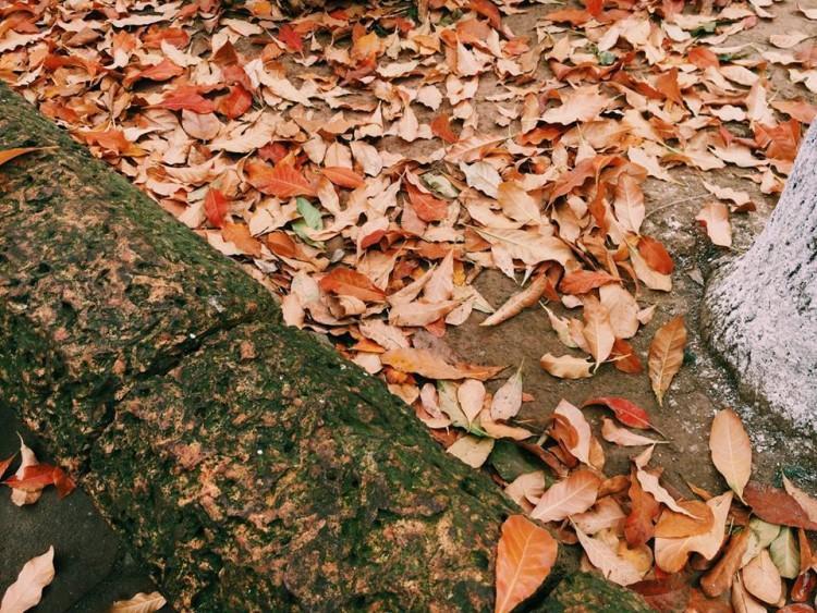 Những con đường phủ đầy lá rụng.