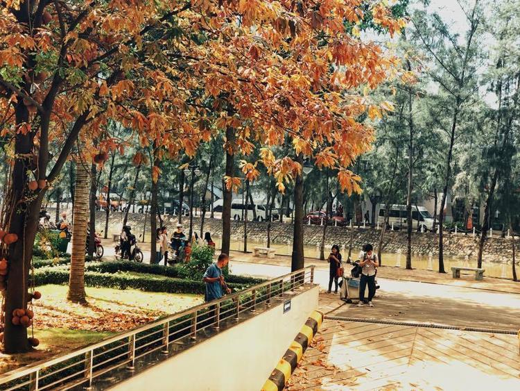 Thật khó tin khi ở Sài Gòn cũng xuất hiện cây lá đỏ đẹp như vậy.