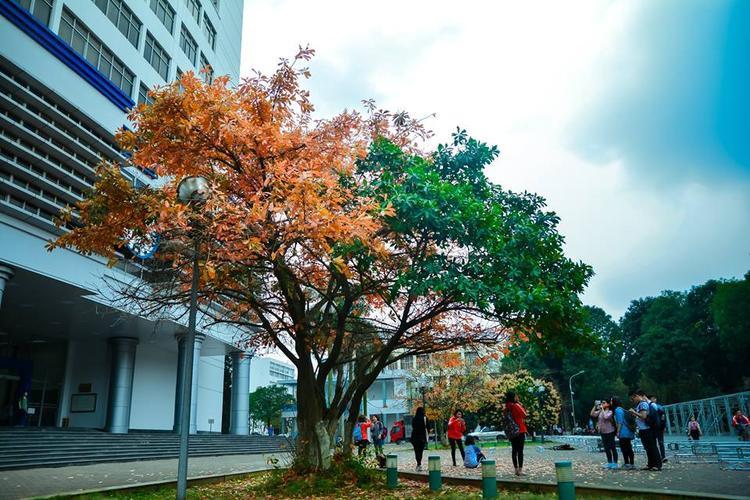 Khung cảnh vào mùa xuân với hàng cây lộc vừng lá đỏ.
