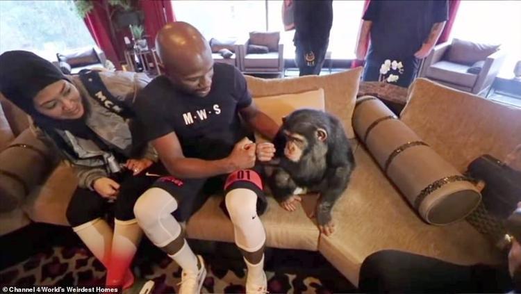 """Tay đấm Floyd Mayweather cũng từng tới thăm vườn thú tại dinh thự của """"Rich Kid"""" Dubai. Ảnh: Channel 4"""
