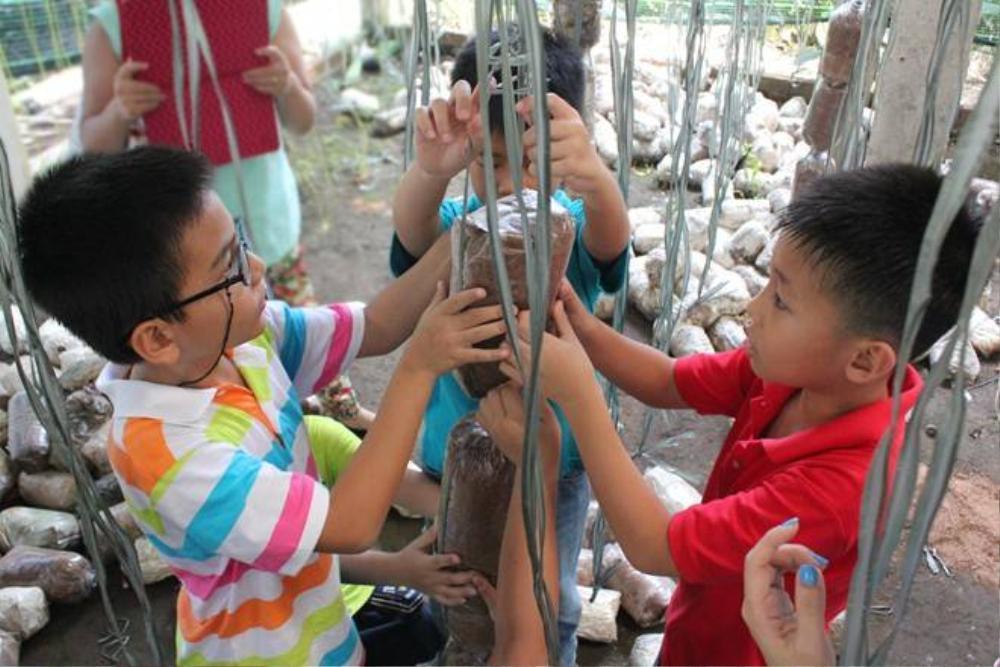 Ngoài chăn nuôi, trang trại cũng tổ chức cho các gia đình trồng các loại nấm linh chi, bào ngư... Khách sẽ được tham quan các vườn nấm, tham gia vào quá trình thu hoạch. Toàn bộ sản phẩm thu hoạch được sẽ được bán giá rẻ chỉ 20.000 -50.000 đồng/kg nấm bào ngư.