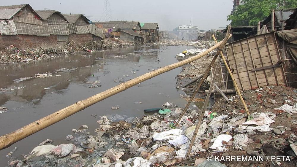 Chất thải từ những lò mổ cùng hóa chất được xả trực tiếp vào con sông bên cạnh.