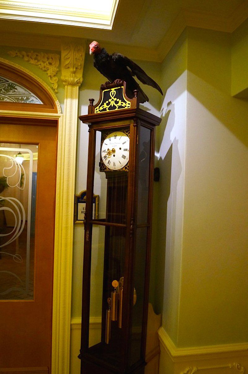 "Also in the reception area is a vulture on a grandfather clock. ""When Walt Disney first planned the club, he had a vulture in the trophy room and in the chandeliers there were microphones so that he could listen to guest conversations and then have the vulture talk back from the clock,"" Doyle said. They abandoned that plan pretty quickly, but the vulture still remains — and talks to guests!"