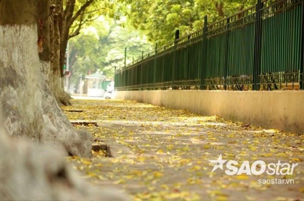 Thảm lá vàng nằm góc nhỏ đường Hoàng Hoa Thám.