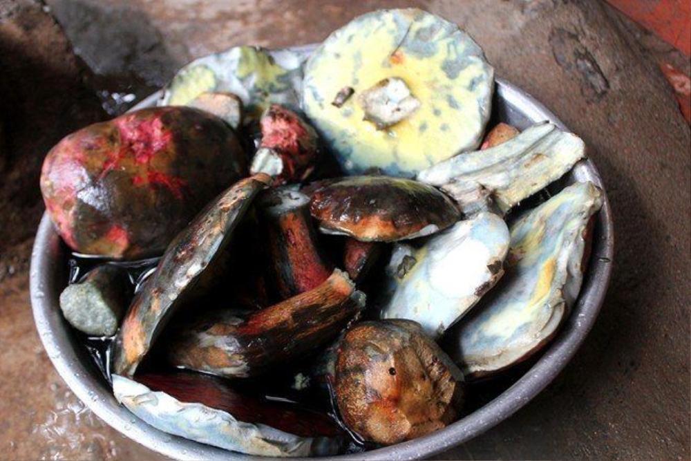 Nấm gan bò, loại nấm đặc sản thu hái trong rừng thông hiện có giá bán cực đắt đỏ