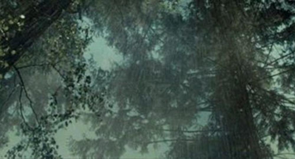 Trong các vụ mất tích, cơn mưa thường đổ xuống, xóa hết mọi dấu vết.
