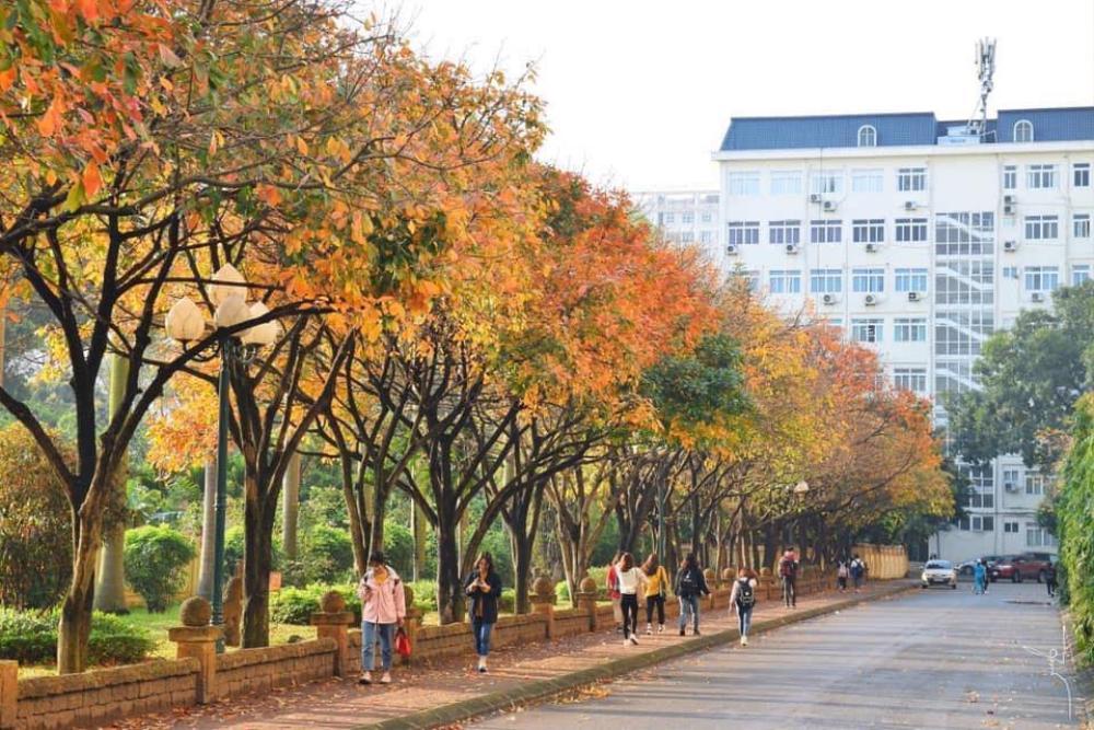 Có một 'con đường tình yêu' bên trong trường ĐH Sư phạm Hà Nội mỗi dịp đông về Ảnh 2