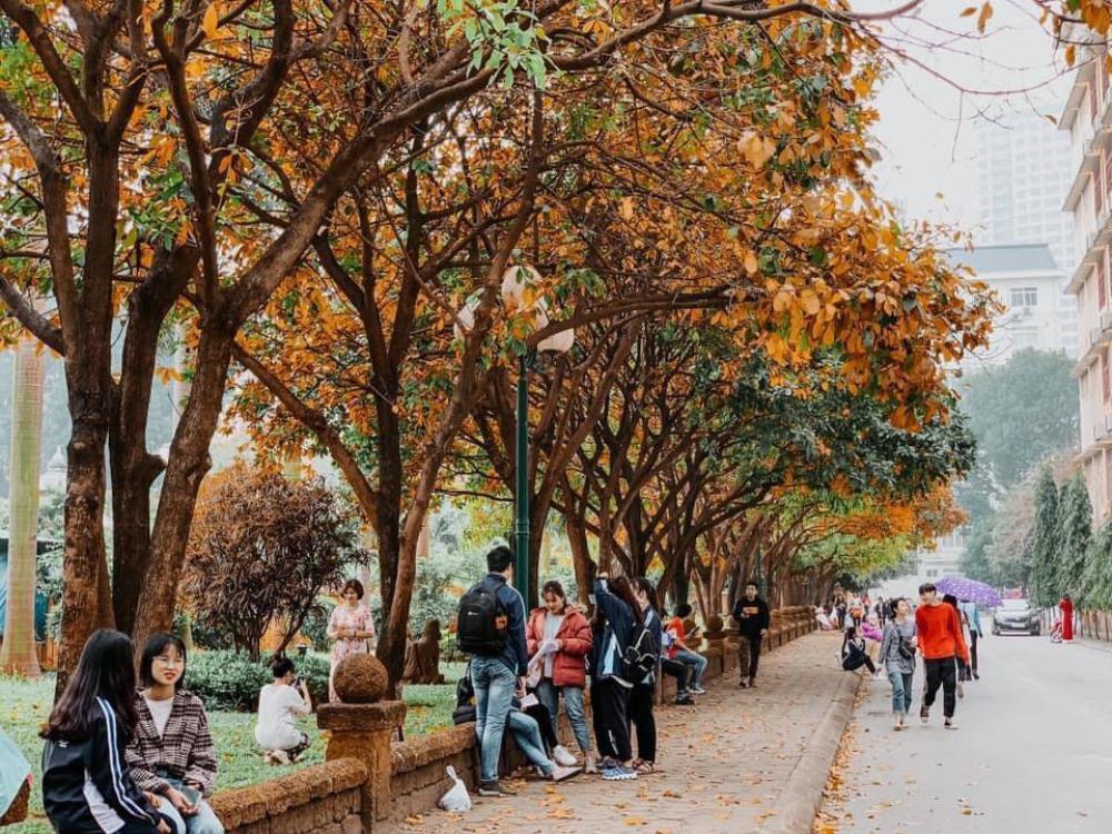 Có một 'con đường tình yêu' bên trong trường ĐH Sư phạm Hà Nội mỗi dịp đông về Ảnh 1