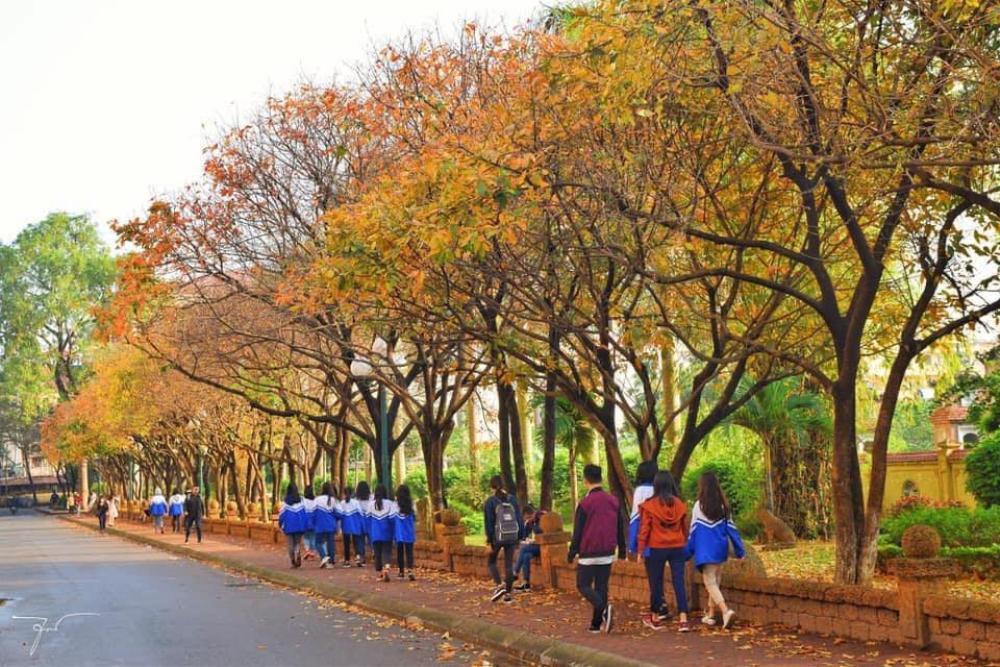 Có một 'con đường tình yêu' bên trong trường ĐH Sư phạm Hà Nội mỗi dịp đông về Ảnh 3