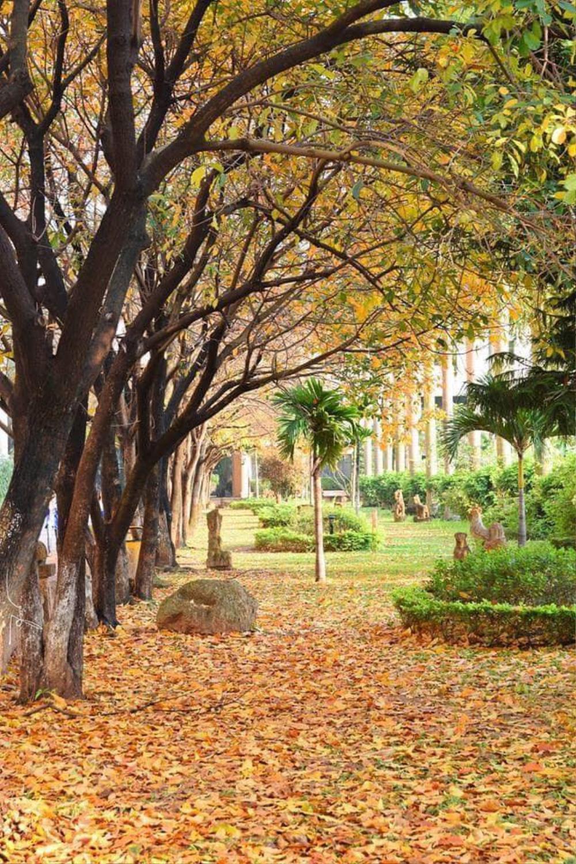Có một 'con đường tình yêu' bên trong trường ĐH Sư phạm Hà Nội mỗi dịp đông về Ảnh 4